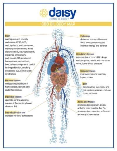 CBD Oil Body Map