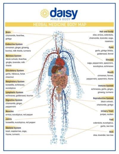 Herbal Medicine Body Map